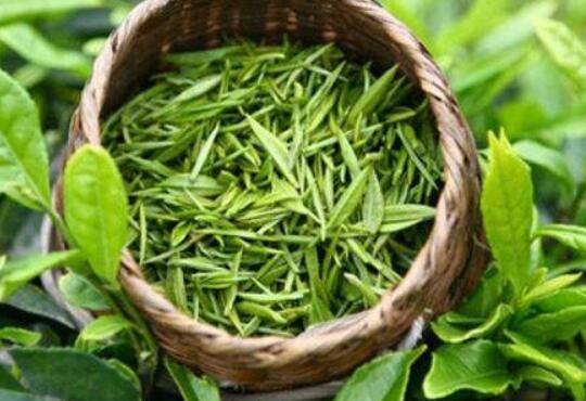 女人喝绿茶减肥吗